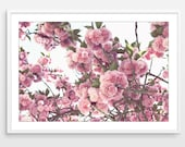 Pink Cherry Blossoms Prin...
