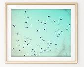 Birds Wall Art, Nature Ph...