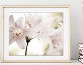 Flower Photography Print,...