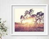 Landscape photography, Oa...