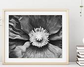 Poppy Flower Print, Black...