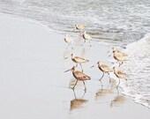 Shorebirds Beach Print, O...