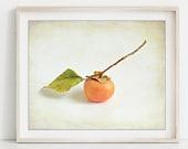 Persimmon Art Print, Frui...