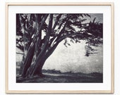Cypress Tree Print,  Blac...
