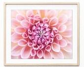 Pink Dahlia Flower Art, B...