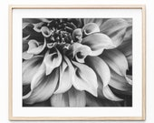 Dahlia Flower Print, Blac...