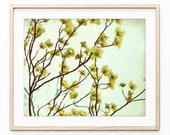 Dogwood Flowers Print, Pa...