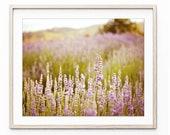 Lavender Field Print Drea...
