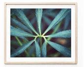 Botanical Print, Hellebor...