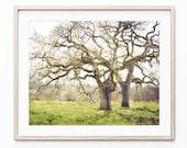Landscape Photography Pri...