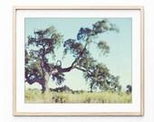 Oak Tree Photograph Rusti...