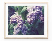 Flower Photography, Lilac...