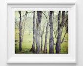 Forest Landscape Photogra...