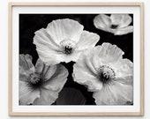 Poppy Flowers Print, Blac...