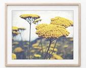 Yarrow Flowers Wall Art B...