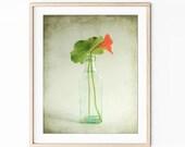 Nasturtium Flower Still L...