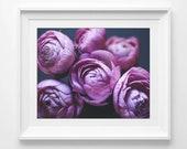 Flower Photography, Ranun...