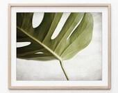 Monstera Leaf Photograph,...