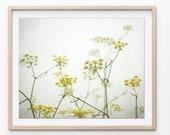Fennel Botanical Print, W...