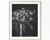 Queen Annes Lace Print, F...