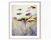 Botanical Print, Yarrow F...
