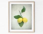 Lemon Photograph, Fruit P...