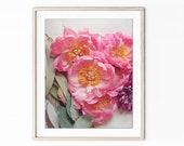 Flower Photography, Peony...