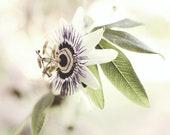 Passionflower Print, Bota...