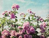 Rose Botanical Print, Pin...