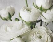 White Ranunculus Flower P...