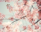 Cherry Blossoms Print, Bo...