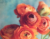 Botanical Photography, Aq...
