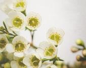 Flower Art Photography, W...