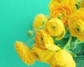 Flower Photography Botani...