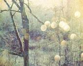Woodland photograph sage ...