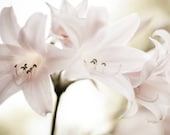 Pale Pink Botanical Print...