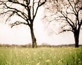 Landscape Photography Oak...