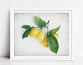 Lemon Still Life Print - ...