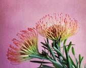 Protea Wall Art Botanical...