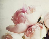 Peony Photography, Pale P...