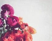 Ranunculus Flowers Botani...