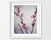 Pink Flowers Wall Art Plu...
