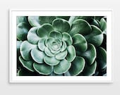 Sedum Photograph - Botani...