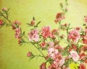 Flower Still Life, Botani...