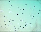 Flying Birds Print, Natur...