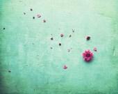 Pink Flower Petals, Zen S...