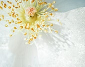 White Rose Print, Flower ...