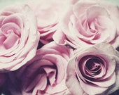 Flower Photography, Roses...