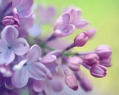 Lilac Flowers Wall Art, C...