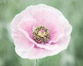Poppy Flower Photography ...